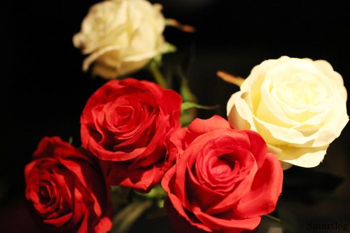 メジャー☆ファーストのバラ
