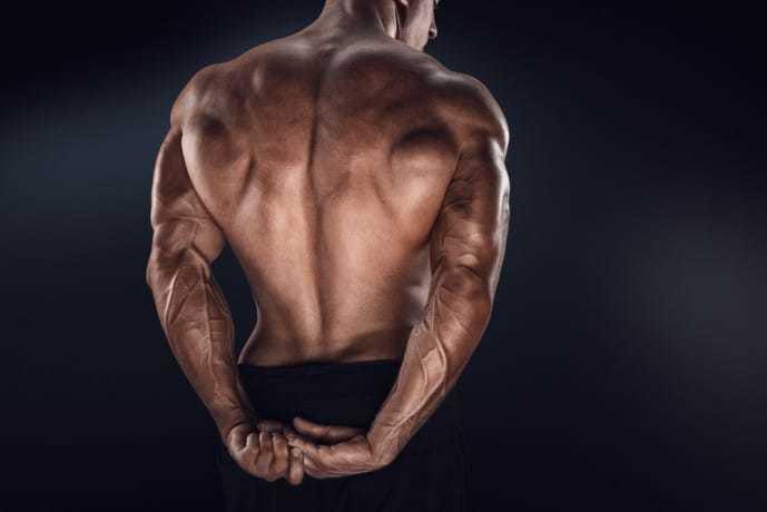 背中を守る脊柱起立筋
