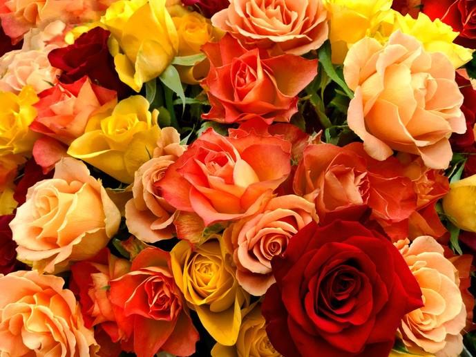 母の日に贈りたいバラの色別花言葉