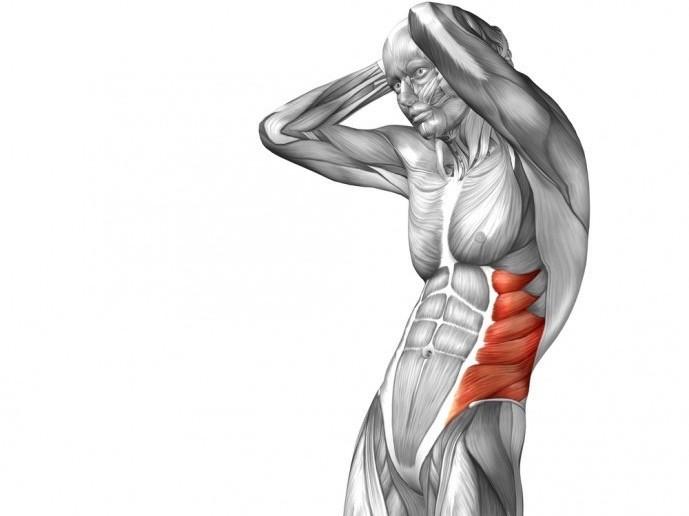 脇腹にある腹筋である腹斜筋