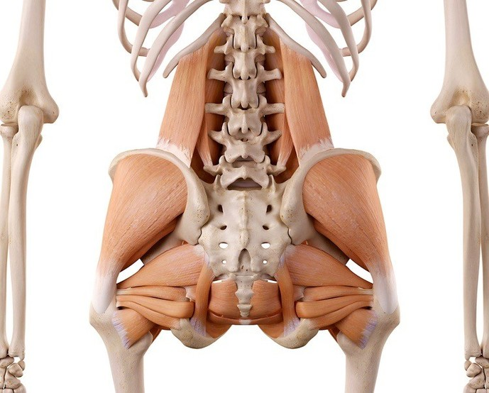 レッグレイズで鍛えられる筋肉部位