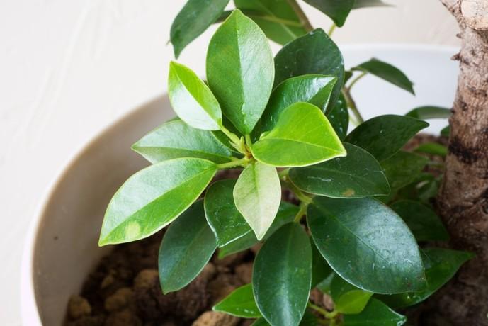 観葉植物を育てる男性