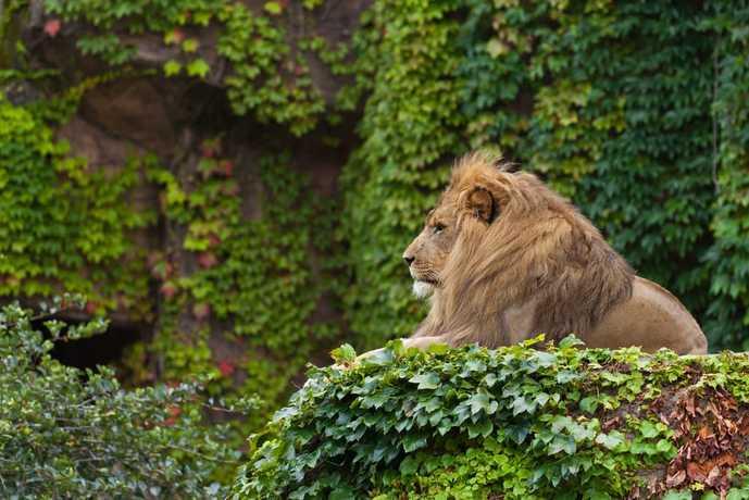シカゴの観光スポットのリンカンパーク動物園