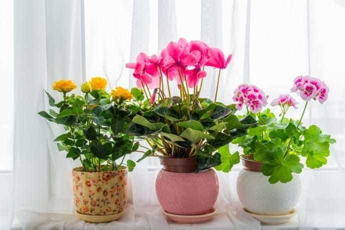 母の日はおしゃれな鉢植えをギフトに.jpg