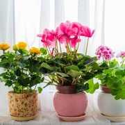 母の日はおしゃれな鉢植えをギフトに
