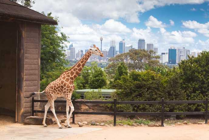 オーストラリアのおすすめの観光スポットにタロンガ動物園