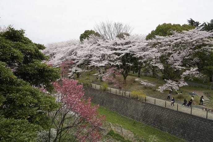 春デートのおすすめスポット「国営昭和記念公園」