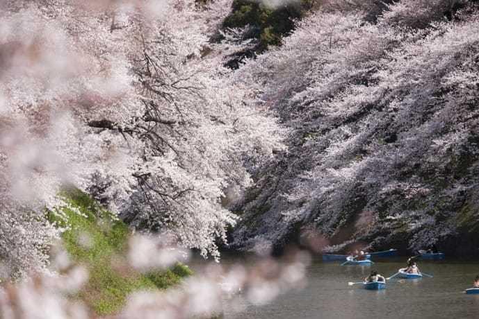 春デートにおすすめスポット「上野恩賜公園」