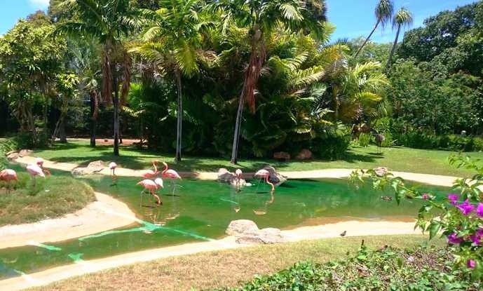 ハワイのおすすめ観光スポット「ホノルル動物園」