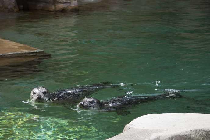 バンクーバーのおすすめ観光スポット「バンクーバー水族館」