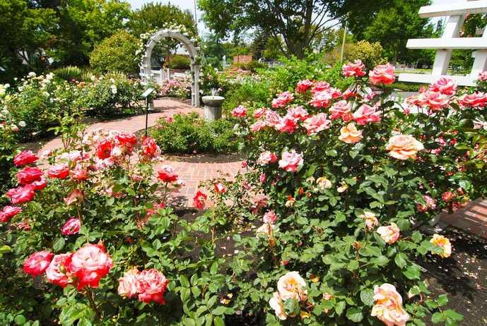 ソノマでおすすめの観光地はルーザー・バーバンク・ホーム & ガーデンズ