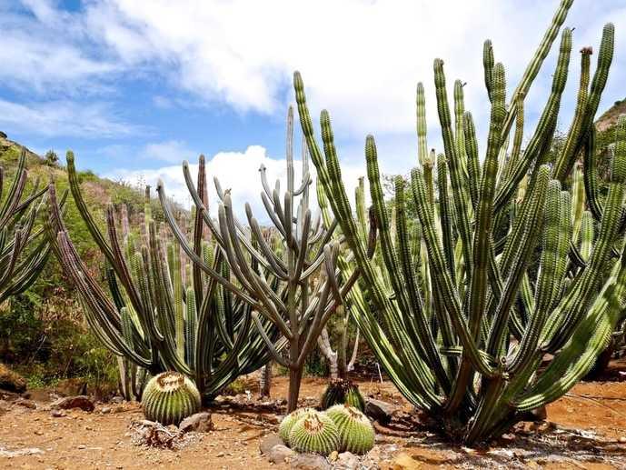 ハワイのおすすめ観光スポット「ココクレーター植物園」