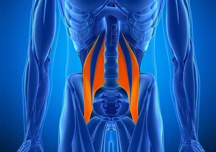 股関節のインナーマッスル「腸腰筋」