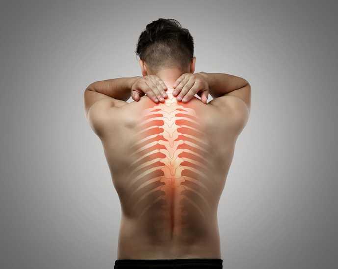 背中のインナーマッスル、脊柱起立筋