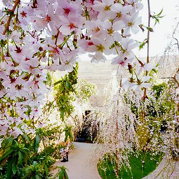 桜が見えるレストラン