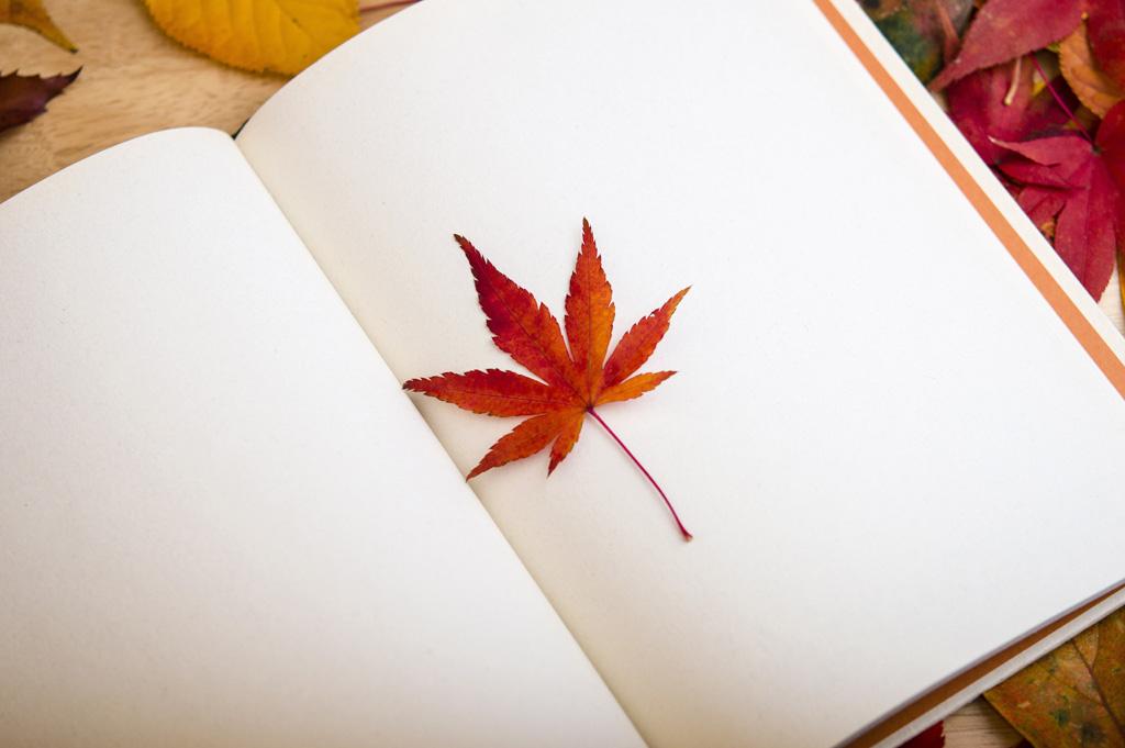 秋 節約デート