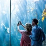 水族館デートへ付き合う前に行くと恋が加速する「7つの理由」 | Smartlog