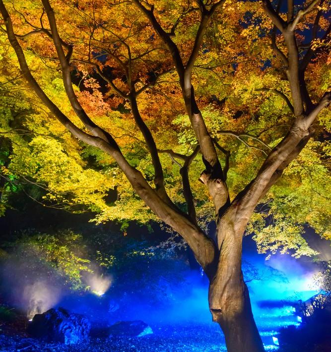 六義園で秋の紅葉デート