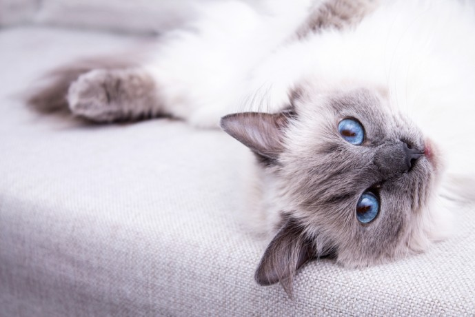 猫系女子 ツンデレ