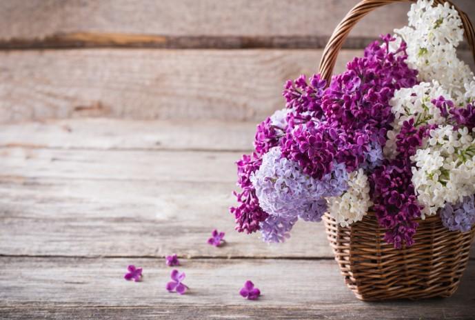 ライラック 花