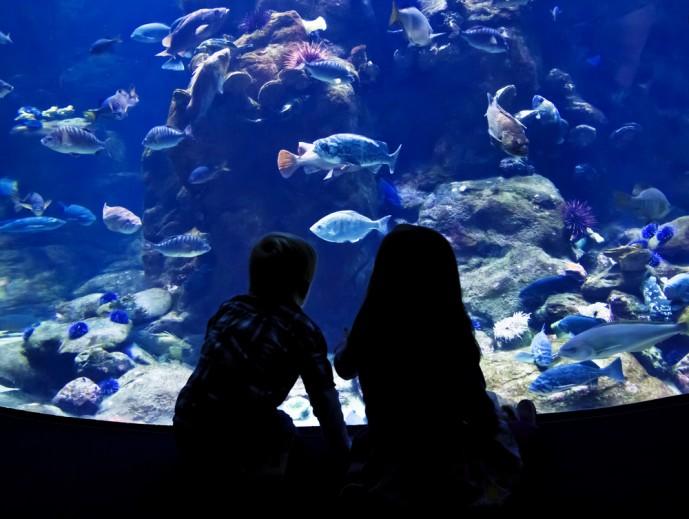 水族館デート おすすめ