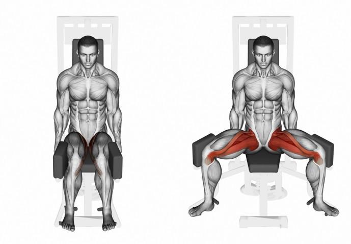 内転筋はどこの筋肉か