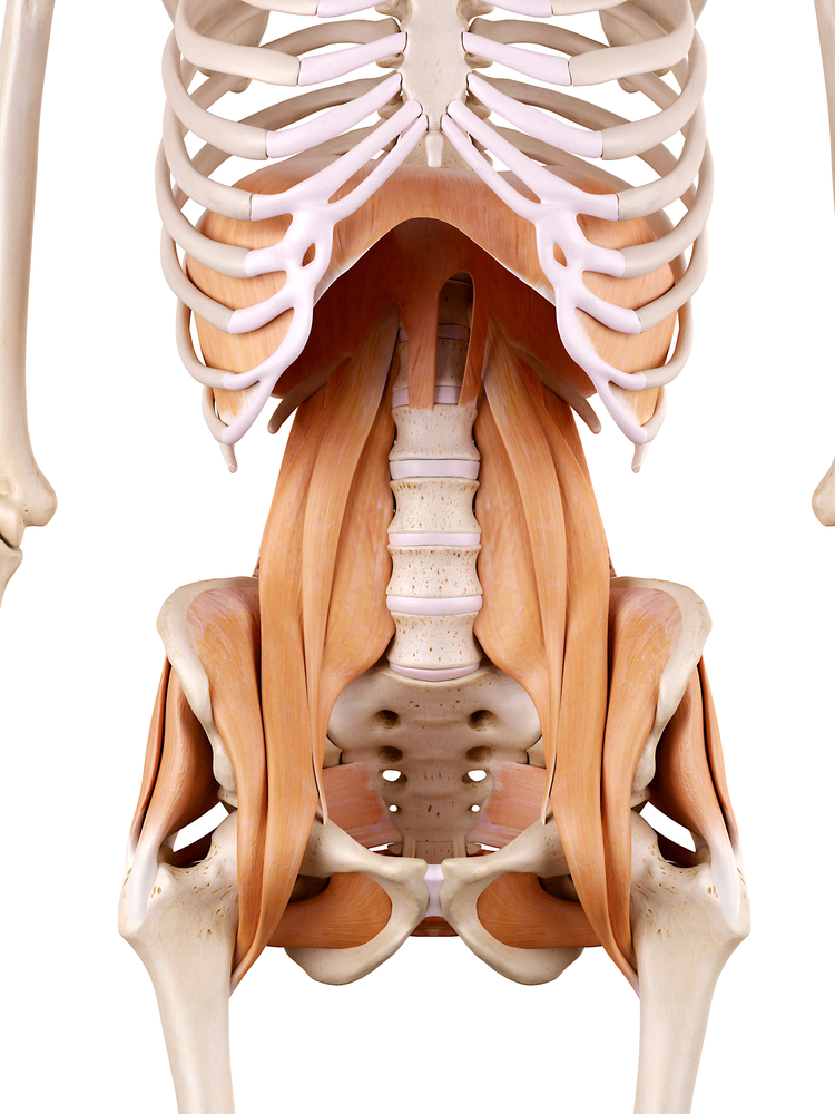 腸腰筋の具体的な場所