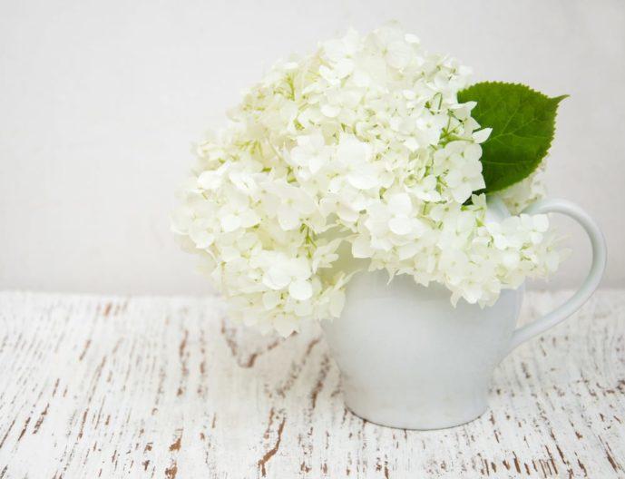 母の日のプレゼントはアジサイの花束