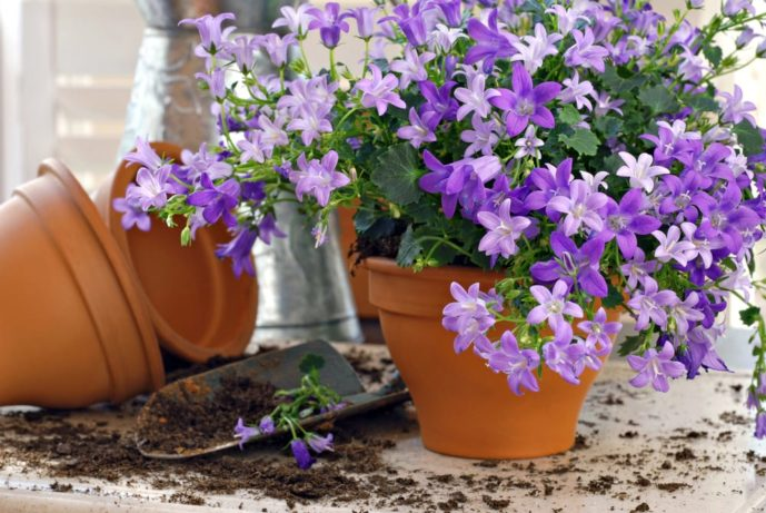 母の日のプレゼントは鉢植えの花を